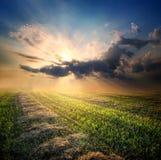 Abgeschrägtes Feld des Weizens Lizenzfreie Stockfotos