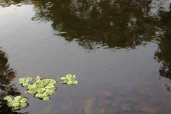 Abgeschrägtes seichtes Wasser Stockfoto