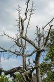 Abgestorbene Bäume mit kahlen ästen, döda träd med kal kli royaltyfria foton