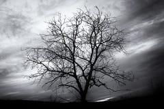 Abgetöntes Schwarzweiss-Bild des bloßen Baums Stockbild