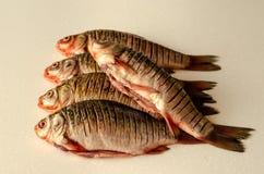 Abgezogene Fische Crucian Karpfen stockfotos