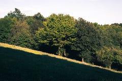 Abhang mit Bäumen und Wiese Stockfotografie