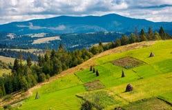 Abhang mit Reihe von Heuschobern auf ländlichem Feld Stockbild