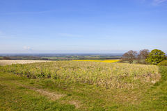 Abhang Wildflowers und das Tal von York Lizenzfreie Stockbilder