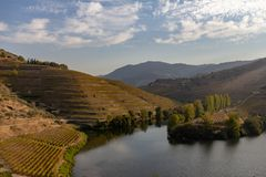 Abhangweinberg in der Duero-Flussregion, Portugal stockfotografie