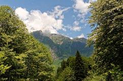Abhazia Zdjęcie Stock