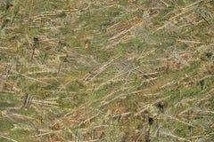 Abholzung. Lizenzfreies Stockbild