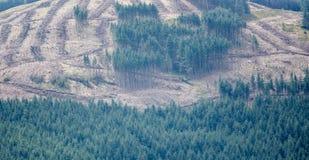 abholzung Lizenzfreies Stockfoto