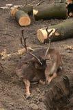 Abholzung Stockfotos