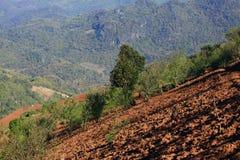 Abholzung auf dem Berg Stockfotografie