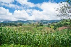 Abholzung auf dem Berg für landwirtschaftliches an Tak-Provinz I Lizenzfreie Stockfotos