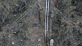 Abholzung eines Waldes nach einem Hurrikan, Ansicht von einem Brummen stock video footage