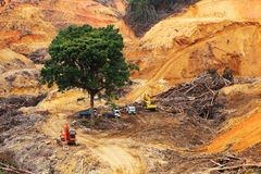 Abholzung innerhalb des tropischen Waldes lizenzfreie stockfotografie
