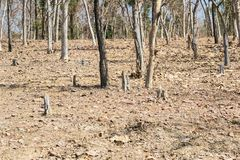 Abholzung und Baum-Holzschlag Lizenzfreie Stockfotografie