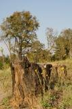 Abholzungsbaumstümpfe Stockbild