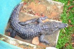Abidjan Zoo Stock Photo