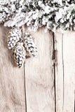 Abies grandis-Baum bedeckt mit Schnee auf hölzernem Brett mit Spindel [yspace Stockfoto