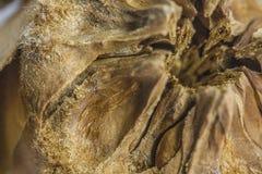 Abies kottedetaljen arkivfoton