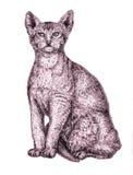 Abisyński kota obsiadanie, ręka rysująca atrament ilustracja royalty ilustracja