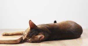 Abisyńska kota odczucia pasja oliwki deska Fotografia Stock