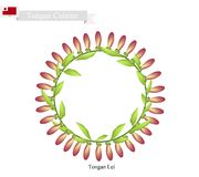 Abitante delle isole Tonga Lei o il Tonga Garland Made From Heilala Flowers Fotografie Stock