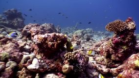 Abitanti subacquei su fondo di fondale marino stupefacente in Maldive archivi video