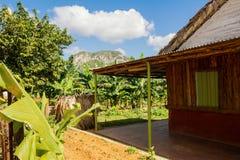 Abitazione rurale nei bananeti nella valle di Vinales Immagini Stock