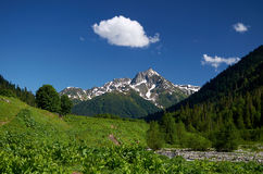 Abkhazia. Alpine meadow. Royalty Free Stock Photography