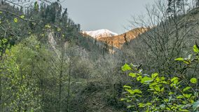 Abkhazia Caucasus Mountains. Trees in the forest, mountain Abkhazia stock video footage