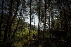 Abkhazia. Forest stock photo