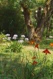 Abkhazian letom Tsvety botanisk trädgård i förgrunden Royaltyfri Fotografi