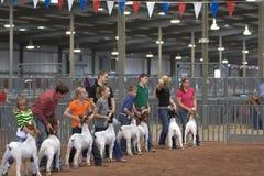Ablagen-und Rodeo-Erscheinen Lizenzfreie Stockfotos