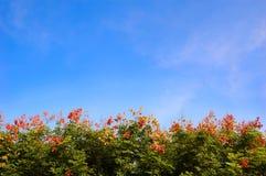 abloom tree för blå sky Royaltyfria Foton