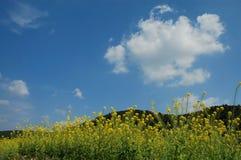 ablooming весна полей Стоковое Изображение