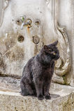 Ablution taps kitty Royalty Free Stock Images