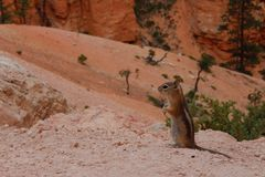 Abnagende Nüsse des netten kleinen Streifenhörnchens - stehendes squirell stockbild