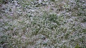 Abnormaal weer De sneeuw gaat naar het Groene Gras in April bij de Lente stock videobeelden