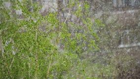 Abnormaal weer De sneeuw gaat op de groene bomen en gaat in April weg bij de Lente Langzame Motie stock footage