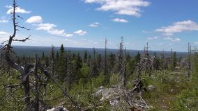 Vottovaara Karelia. Abnormal mountain in Karelia, ugly trees, mystical landscapes. There are more than one and a half thousand stone sades. The sinister secret royalty free stock image