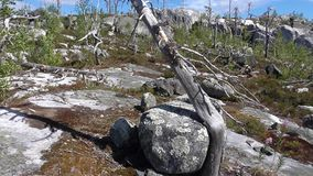 Vottovaara Karelia. Abnormal mountain in Karelia, ugly trees, mystical landscapes. There are more than one and a half thousand stone sades. The sinister secret Stock Photography