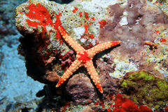 Abnormal starfish Stock Photo