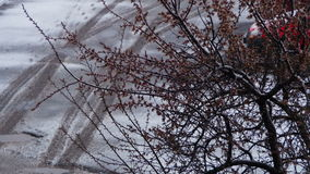 Abnormal weather. Snow goes on the Flowering Tree of Apricots in April stock video
