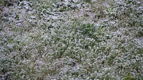 Abnormal weather. Snow goes to the Green Grass in April at Spring stock video footage