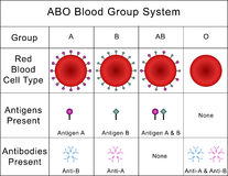ABO Blood Group System vector illustration