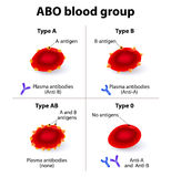 ABO Blood groups. There are four basic blood types, made up from combinations of the type A and type B antigens Royalty Free Stock Images