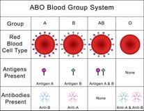 ABO Krwionośnej grupy system ilustracja wektor