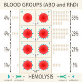 ABO and RhD blood groups systems infographic. The ABO and RhD blood groups systems diagram and infographic. Vector Illustration EPS10 Stock Image