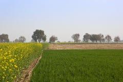 Abohar che coltiva paesaggio Fotografia Stock Libera da Diritti