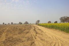 Abohar landscape Royalty Free Stock Photo