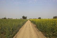 Abohar landscape Stock Images